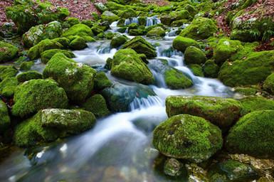 l-eau-naturelle-des-montagnes-584.jpg