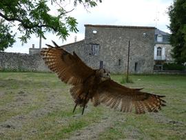 hibou ailes ouvertes.png