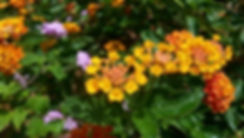 Colorful Orange Flowers