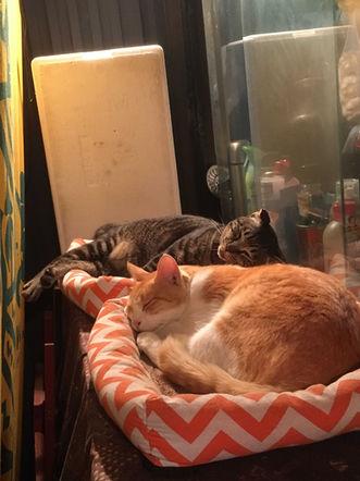 Cats at the Kokai shopping arcade (KM)