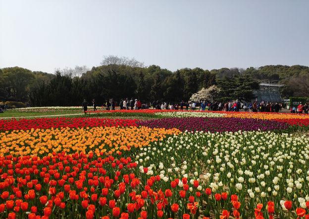 无锡梅园-Plum Garden of Wuxi City-2020 (JD)