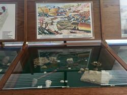 Fossil Exhibit