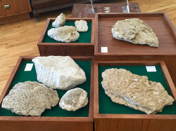 Manitoulin Fossils