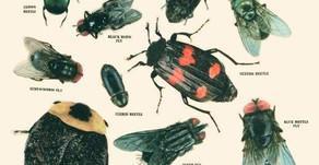 Entomología Forense