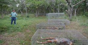 """""""Body farm"""", las granjas de cadáveres para estudio e investigación"""
