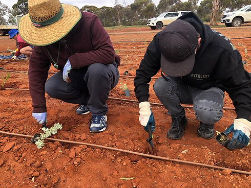 EPIC participants from Kalgoorlie planting small plants into red ground