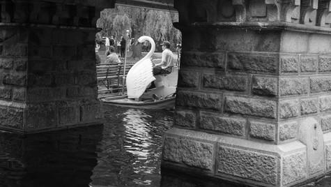 Swan boat (1 of 1).jpg