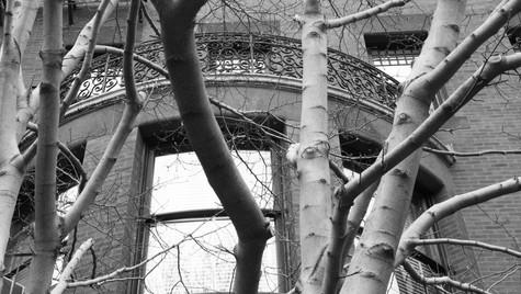 Trees_Window_Boston.jpg