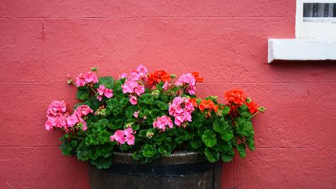 Flower Barrel.jpg