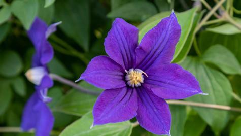 Purple Flower SF.jpg