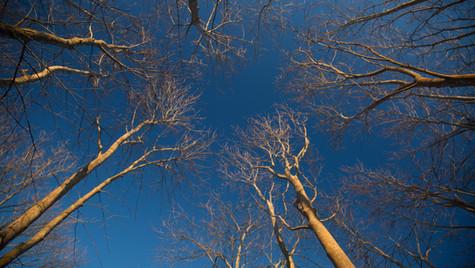 Tree Tops (1 of 1).jpg