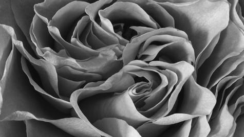 Blackandwhite Rose (1 of 1).jpg