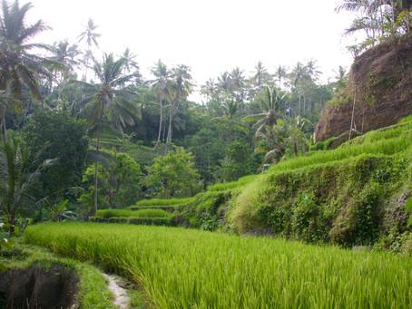 Indonesië deel II, kleurrijk en spiritueel Bali