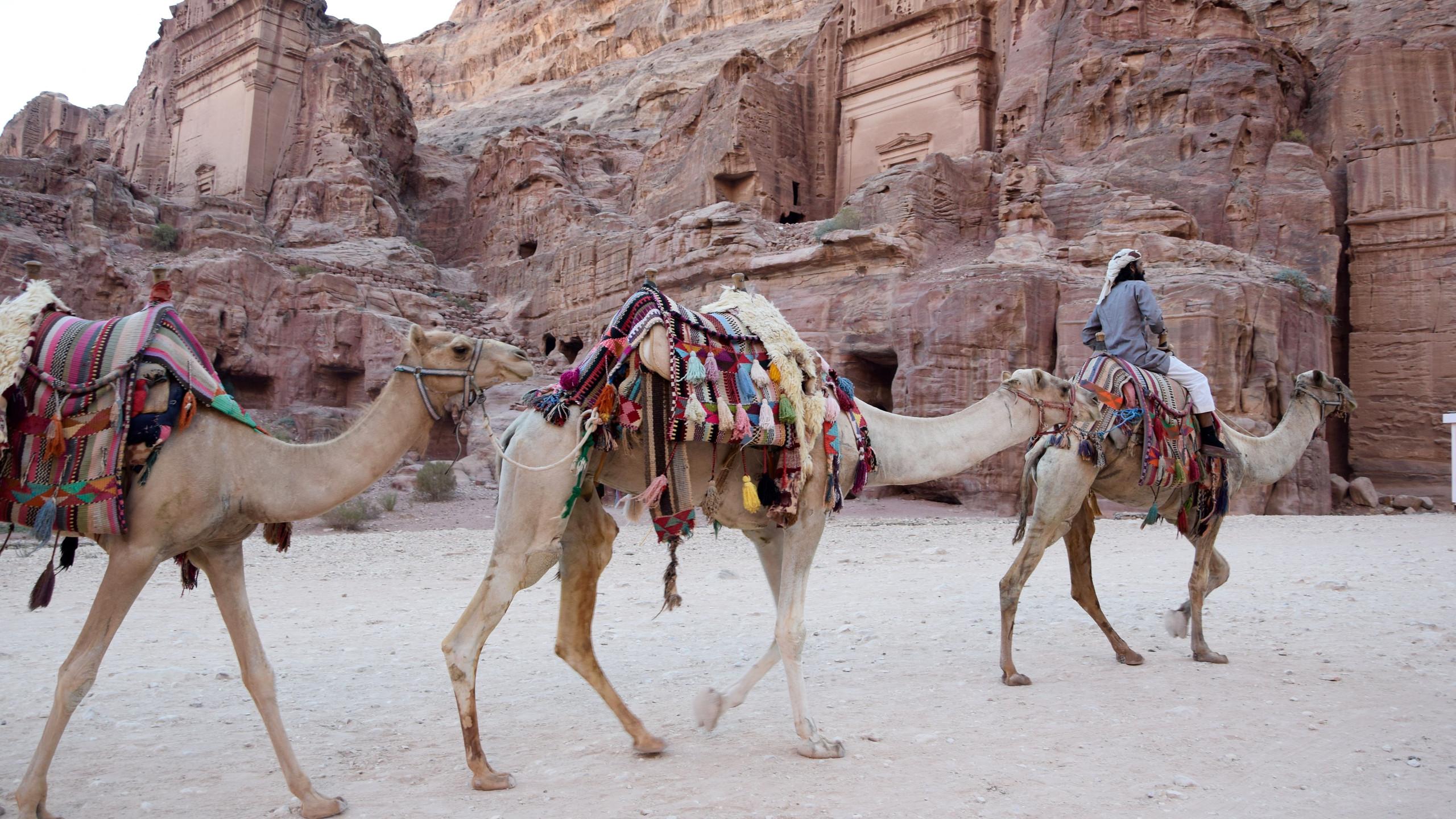 Jordanie Petra kamelen