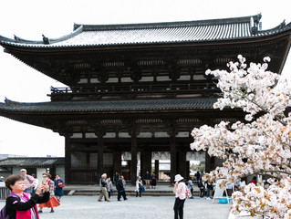 ツアー同行撮影 京都