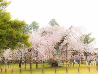 お宮参り出張撮影 上賀茂神社