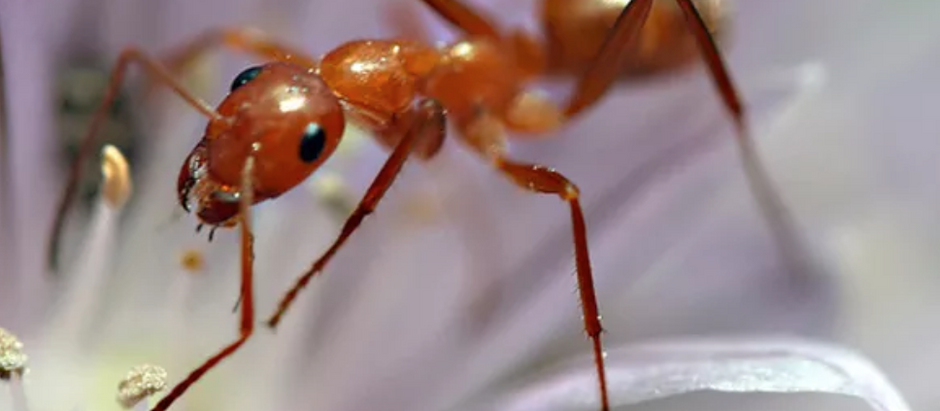The professional way to get rid of ants