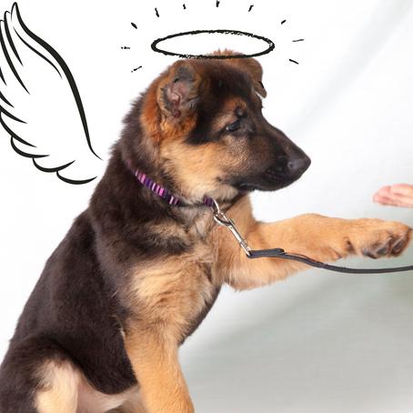 ¿Por qué mi perro no me obedece? Errores comunes en la educación canina.