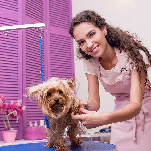 Educando a tu perro (16).png