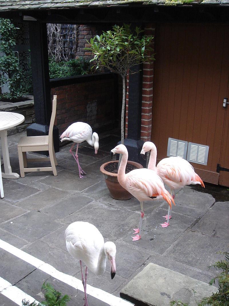 The famous Kensington Roof Garden flamingos