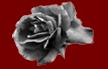 blackrosewred31.png
