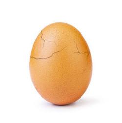 Wolrd Record Egg