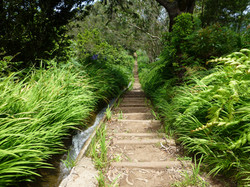 Levada walks, Madeira - Manuel Tours