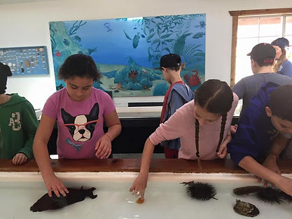Students on field trip at aquarium