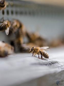 la ruche piquet-2272