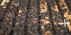 la ruche piquet-1443