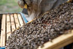la ruche piquet-1683