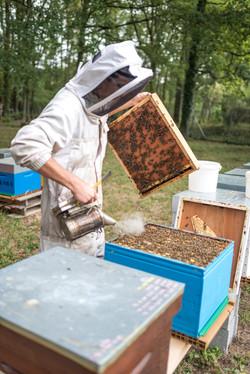 La ruche piquet-1431