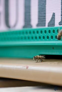 la ruche piquet-2042