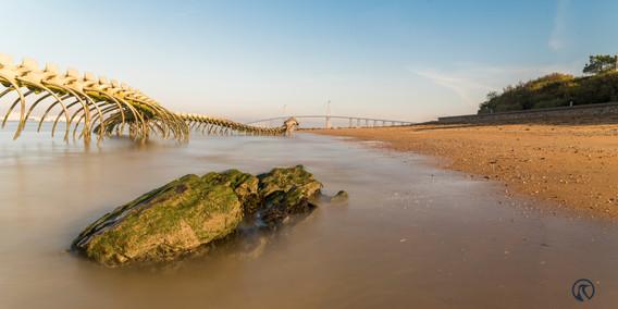 Serpent de Mer, Pont de Saint Nazaire