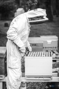 la ruche piquet-1446