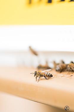 la ruche piquet-1551