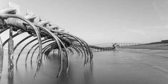 Serpent de mer - Saint Brévin