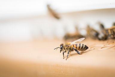 la ruche piquet-1552.jpg