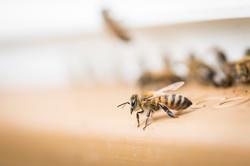 La ruche piquet-1552