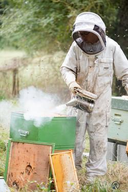la ruche piquet-2351