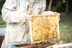 La ruche piquet-1485