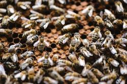 la ruche piquet-1510