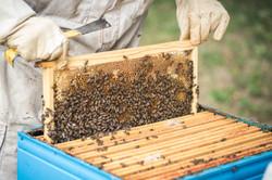 La ruche piquet-1453