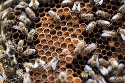 la ruche piquet-1605