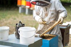 la ruche piquet-1603