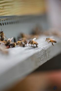 la ruche piquet-2214