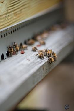 la ruche piquet-2199