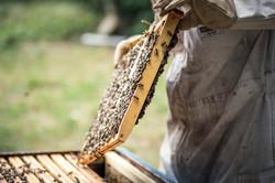 La ruche piquet-1501