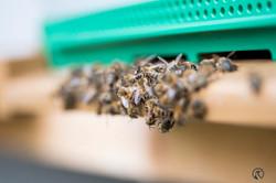 la ruche piquet-1570