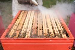 la ruche piquet-1781
